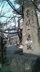 桜1分咲き