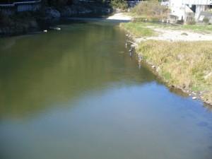 矢作川に釣り人発見